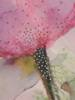 Tunika damska  w fasonie maskującym brzuch 29618